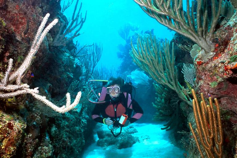 Top 5 dive sites roatan honduras travel guide - Roatan dive sites ...