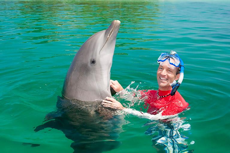 swimming with dolphins in roatan roatan honduras travel guide
